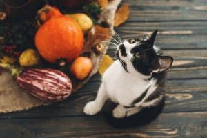 Thanksgiving Tips to Reduce Your Stress