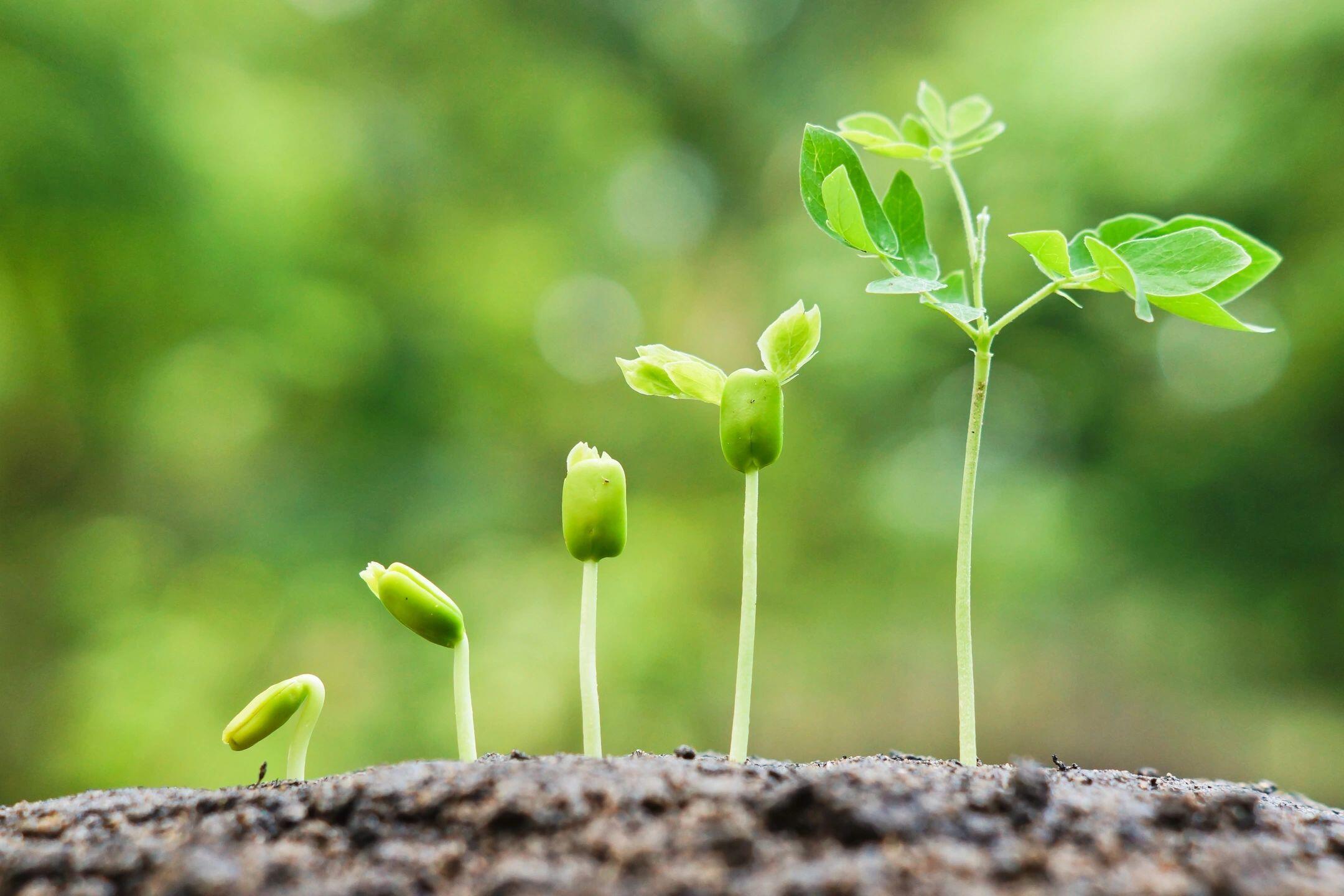 Plant-Wisdom-Spiritual-Growth