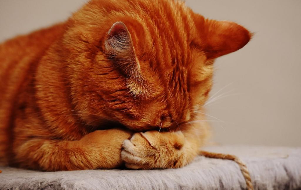 adorable animal animal world cat